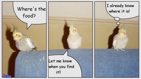 cartoon_birds.jpg